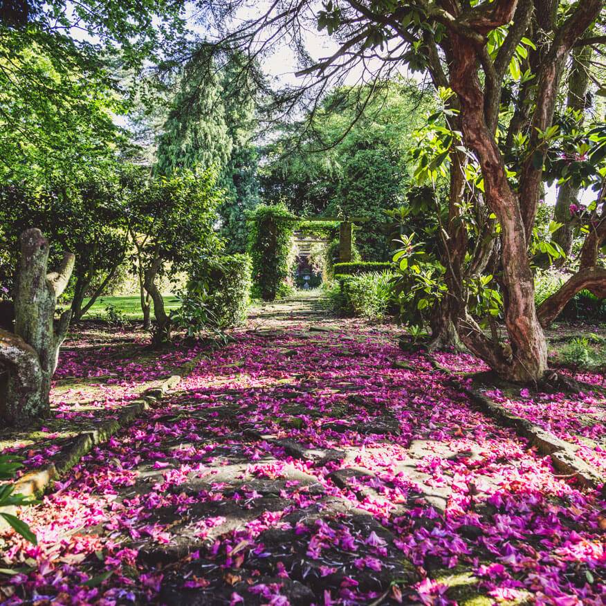 A flower covered pathway at Moor Hall
