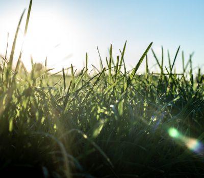 Sun shining through grass in Skelmersdale